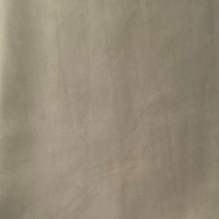 Olifant Grijs